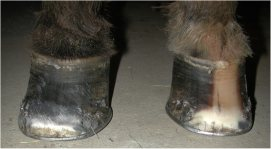 horse hoof treatment